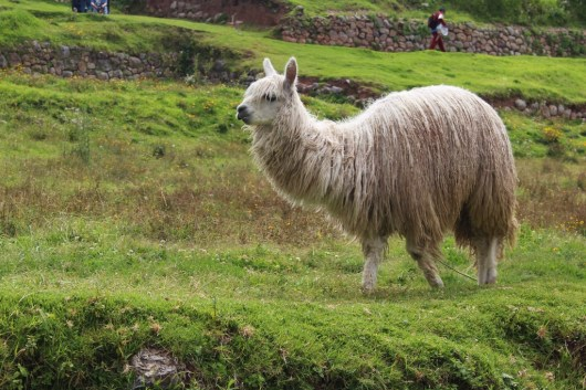 Cusco ist die alte Hauptstadt der Inkas und die Hauptstadt der Provinz. UNESCO, Weltkulturerbe, Machu Picchu, Inka, Quechua, Pizarro, Peru, Alpaca