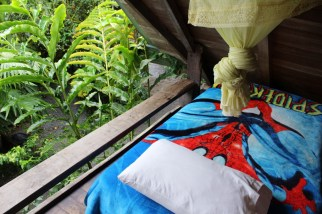 Schmetterlinge in Mindo Ecuador,Puppe,Kokon,Schmetterlingsfarm,Hängematte