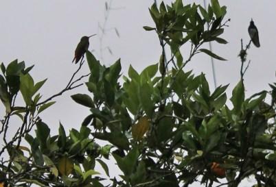 Kolibris direkt im Hostel in Mindo