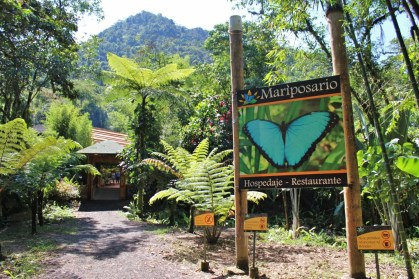 Schmetterlinge in Mindo Ecuador,Puppe,Kokon,Schmetterlingsfarm