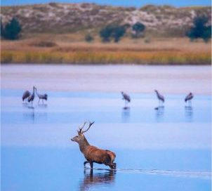 Natureum feiert 30 Jahre Nationalpark mit Freiluftausstellung