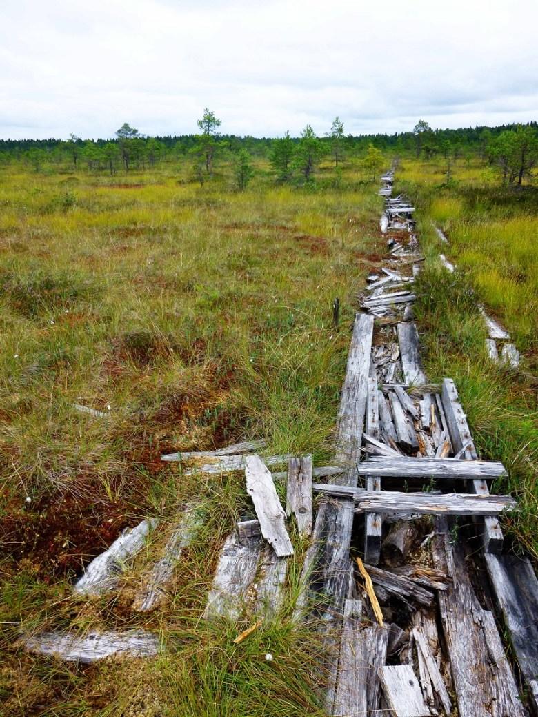Auch das ist Estland: Sympathisch unperfekt. Modernde Bohlenpfade.