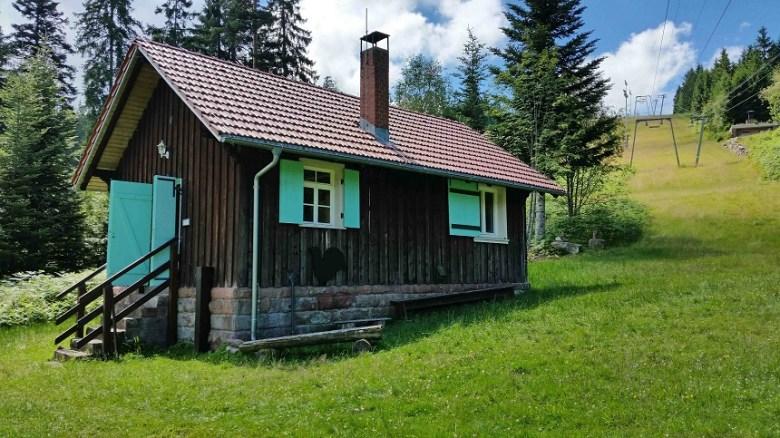 Heidelbeeren Schwarzwald Kinder