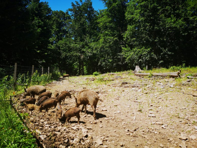 Traufgängerle Hexenküche Wildschweine