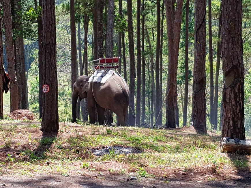 Elefantentour Vietnam