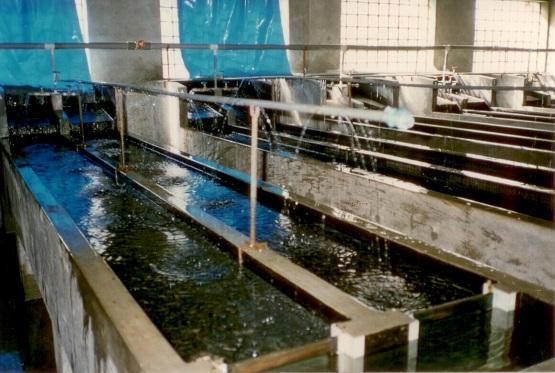 in der Fischzucht von Arapa: Zuchtbecken