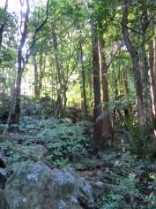 Hübscher Wald