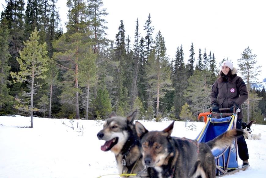 hundekjøring med hundespann på beitostølen4