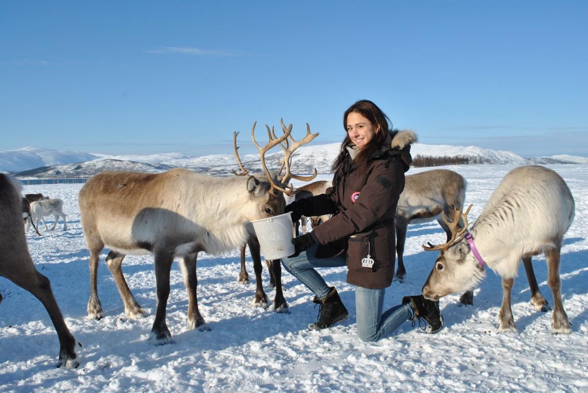 [:nb]Et arktisk reinsdyr-eventyr i Tromsø[:]