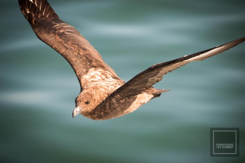 Namibia Rundreise 3 - Seevogel