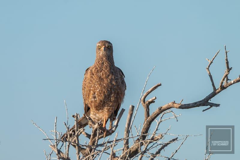 Namibia Rundreise 4 - Raubvogel