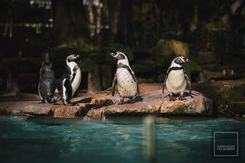Zoo Dortmund - Pinguine
