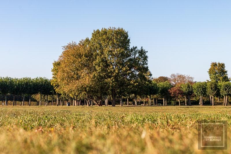Archäologischer Park Xanten - Einsamer Baum