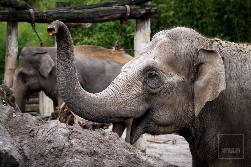 Allwetterzoo Münster - Elefant