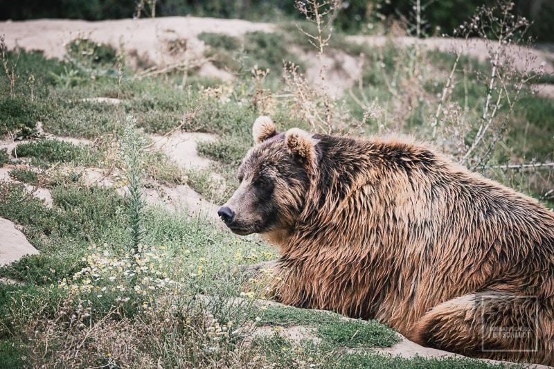 Zoom Erlebniswelt Braunbär