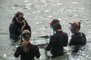 Israel Dolphin Reef