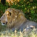 Checkliste für eine Safari in Afrika – Ausstattung und Planung