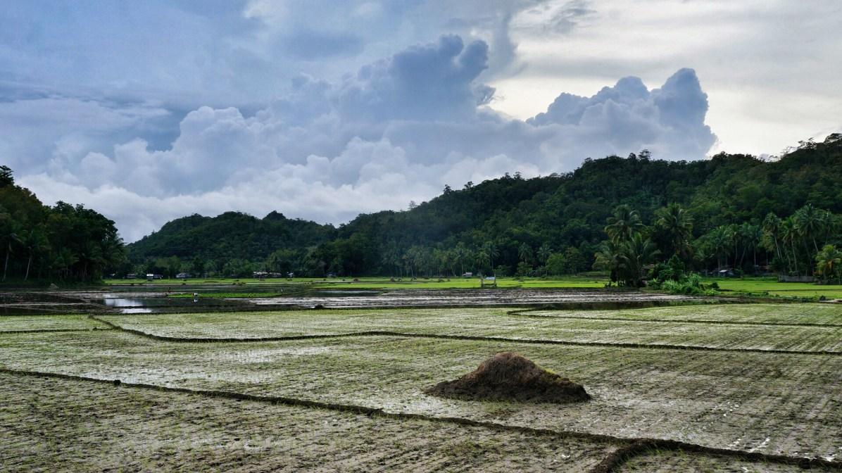 Snapseed(1)Rondreis Filipijnen: rijstvelden Bohol onderweg