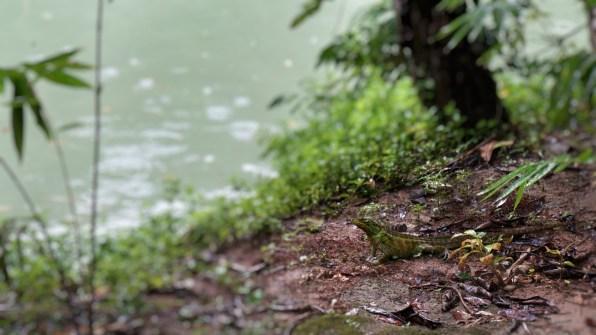 Rondreis Filipijnen: Nuts Huts Bohol gekko