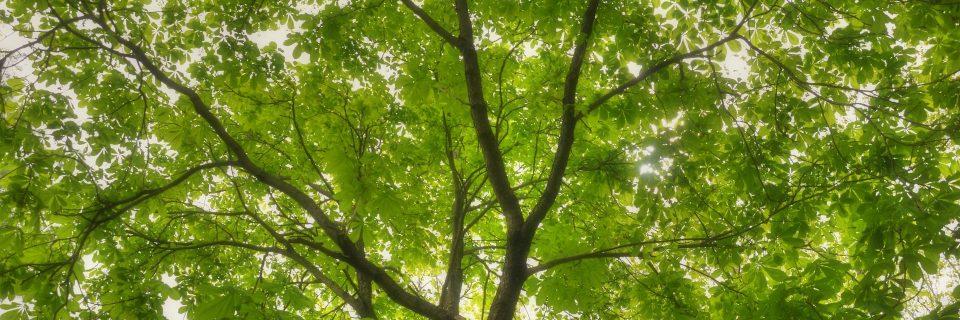 Vos arbres ont une histoire. Laissez nous vous la raconter et en changer le cours.