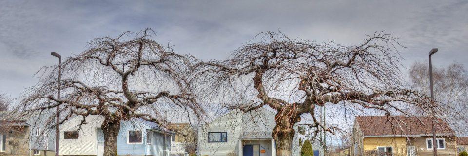 Chaque arbre est unique. Ses besoins le sont aussi.