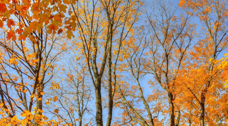 arbres-automne-1920px