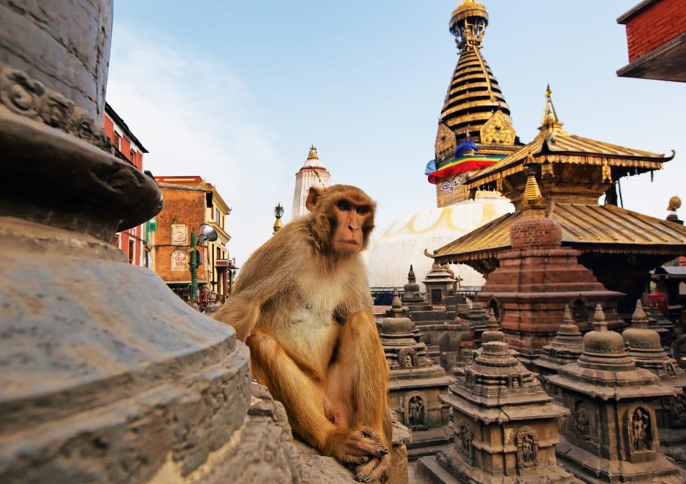 Swayambhunath Stupa - Katmandu i Nepal