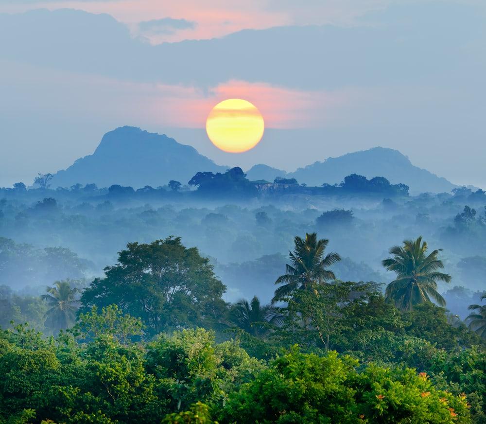Jungle - Sri Lanka