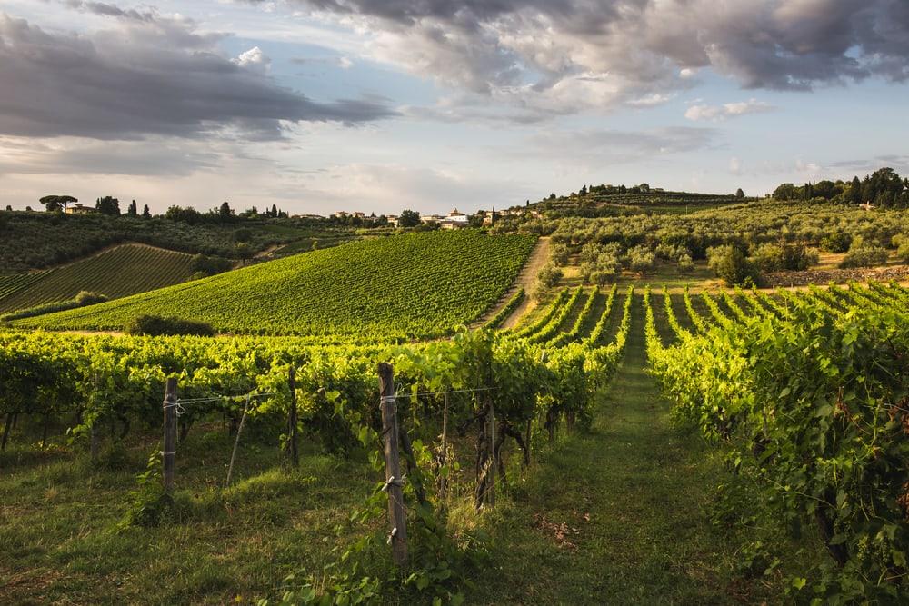 Vinmarker - Toscana i Italien