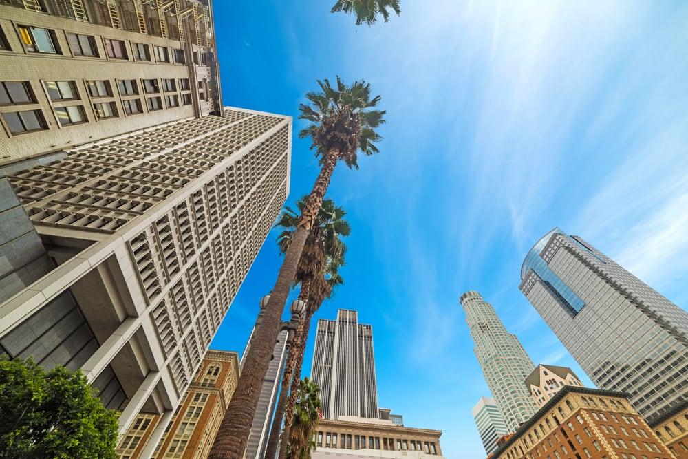 Palmetræer i Los Angeles - Californien i USA