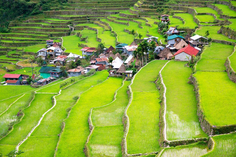 Risterrasser - Filippinerne