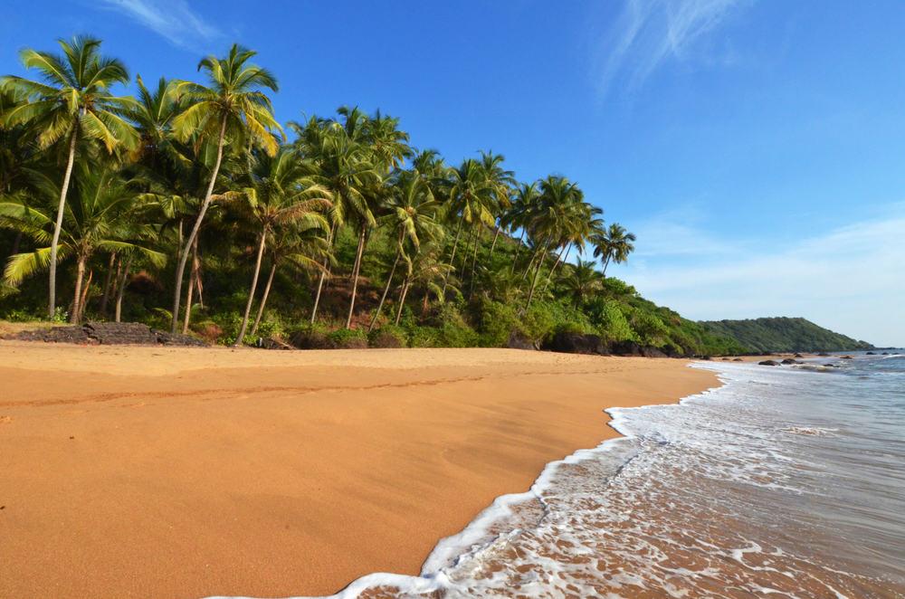 Palmestrand i Goa i Indien