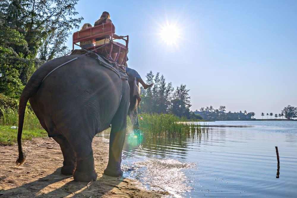 Elefantridning - Phuket i Thailand