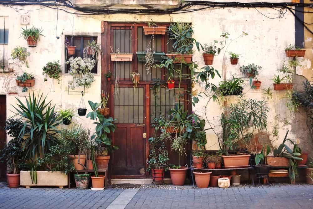 Indgang til hus med mange planter/krukker foran.