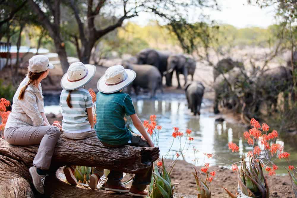 Familie safari i afrika