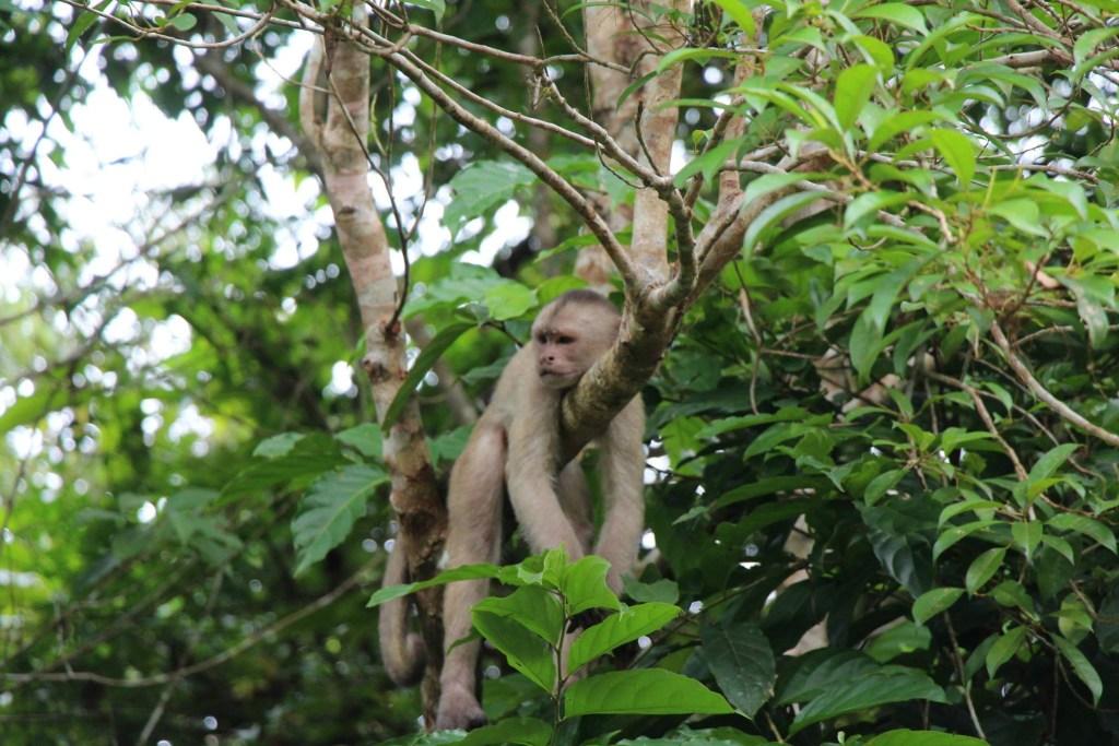 Ecuador - Amazonas - travel