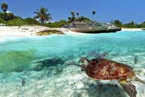 Tanzania - Zanzibar, skildpadde, hav, strand - rejser