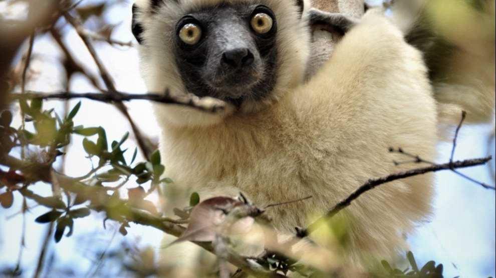 Madagaskar - rejser