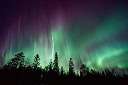 Norge - nordlys, træer - rejser