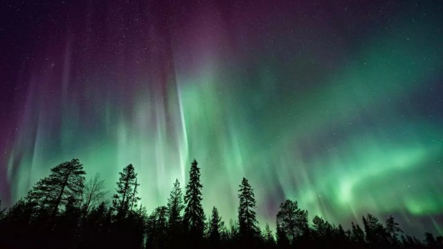 Norway - northern lights, trees - travel