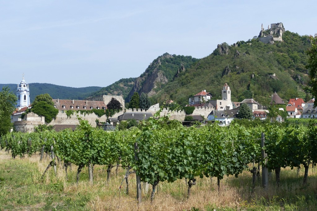 Østrig Wachau - vingård natur durnstein - rejser