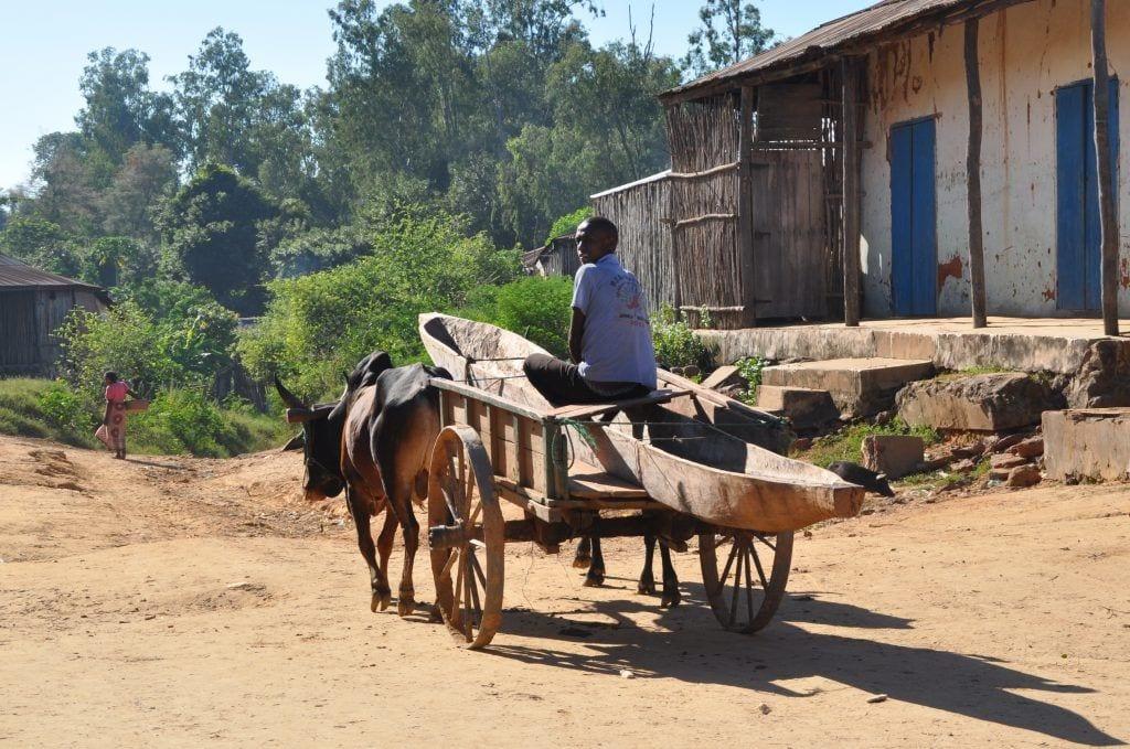 Madagaskar - ko vogn landbrug - rejser