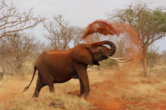 ספארי פילים בקניה