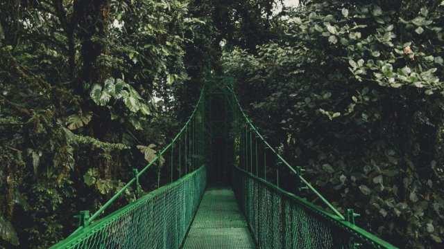 Rainforest - Costa Rica - Travel