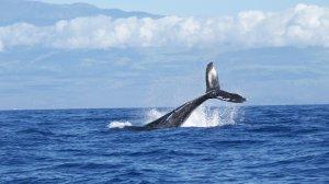 Falaises de baleines