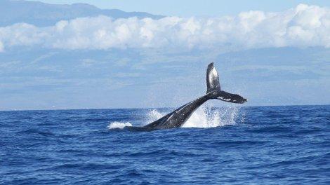 Klify na morzu wielorybów