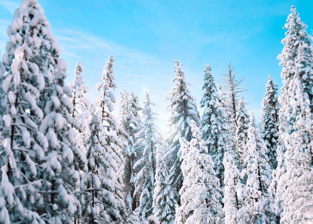 Østrig - Brixental. træer - rejser
