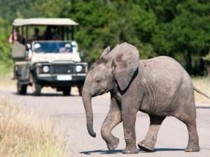 Sydafrika. safari, elefant