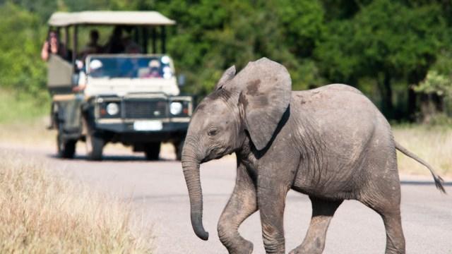 South Africa. safari, elephant