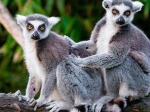 Madagaskar - Afrika - Seyahat